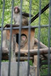 Novosibirsk zoopark dierentuin apen