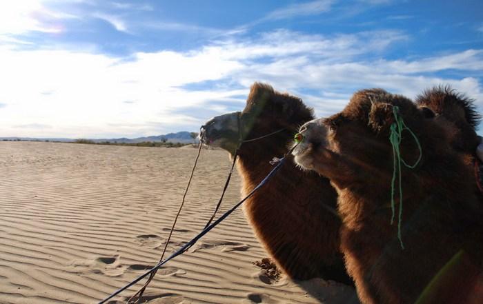 Kameel rijden woestijn Mongolië