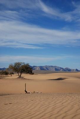 Woestijn Mongolië