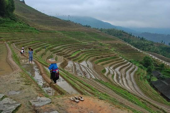 Longsheng rijstterrassen boeren