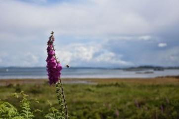 Isle of Mull bloemen zomer
