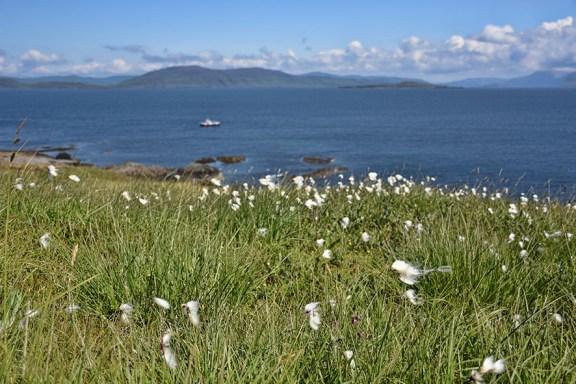 Landschap Staffa Schotland