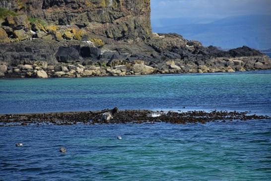 Zeehonden op de Treshnish Isles