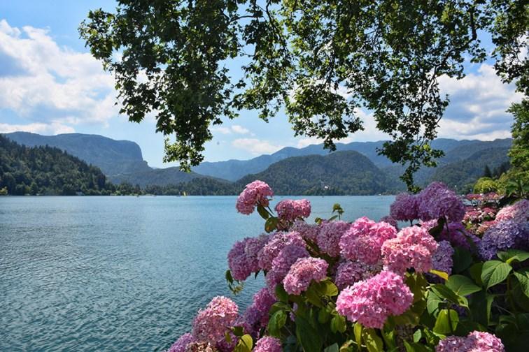 Kasteel in het meer van Bled
