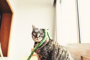 gato con guirnalda verde