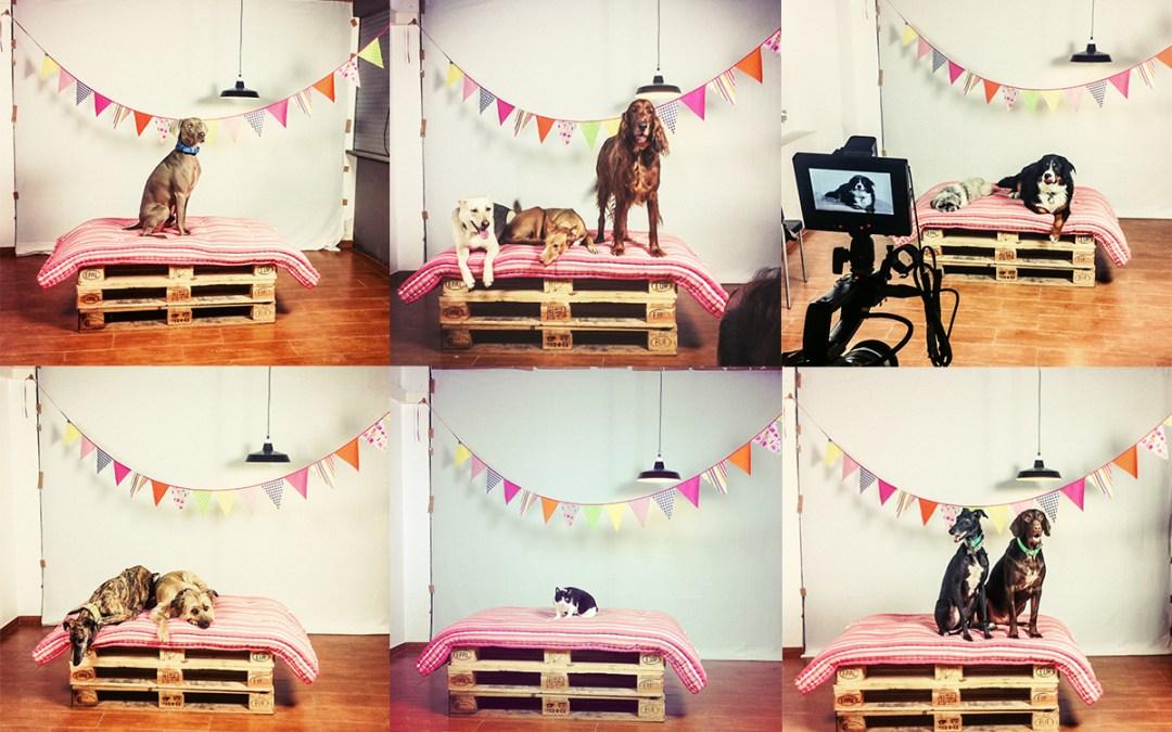 "Fotógrafo de mascotas Video ""Feliz Navidad"" Parte2"