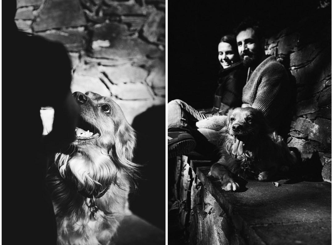 019_fotografia-mascotas_els-magnifics_perro-montseny-buster