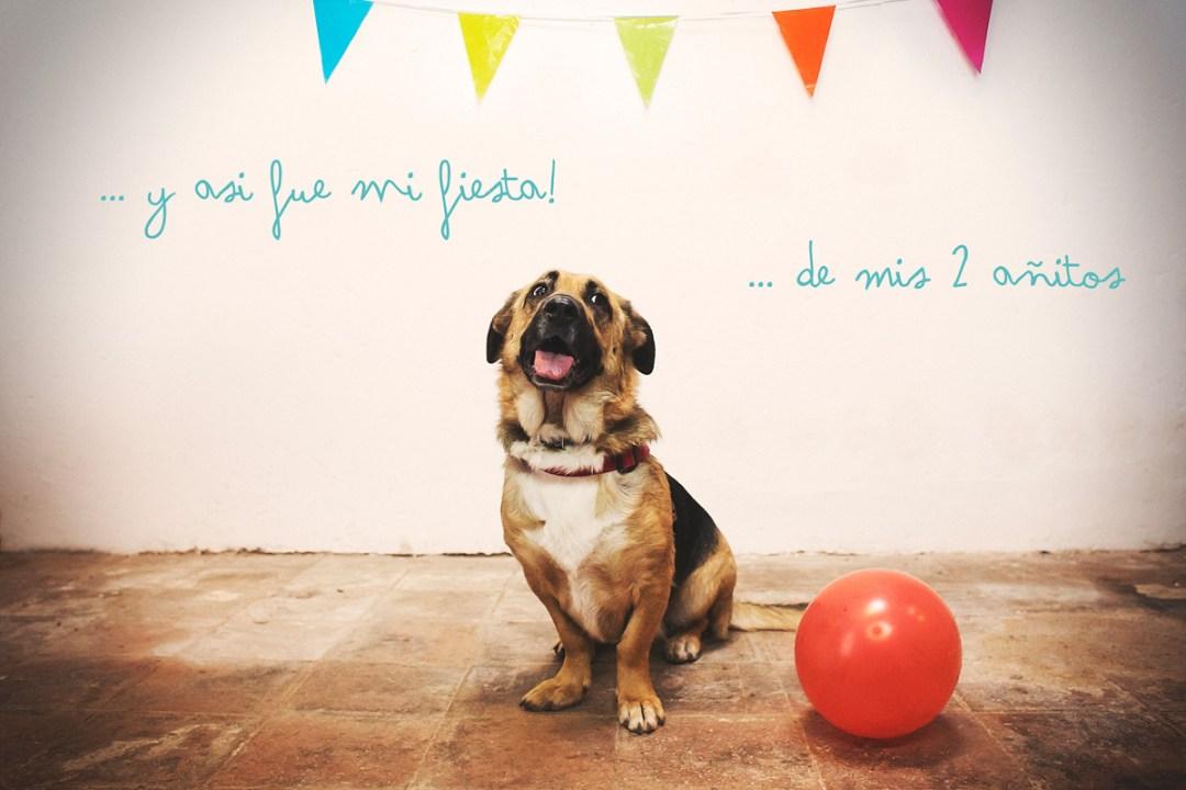Fotógrafo de mascotas «Cumpleaños perruno de Luka»