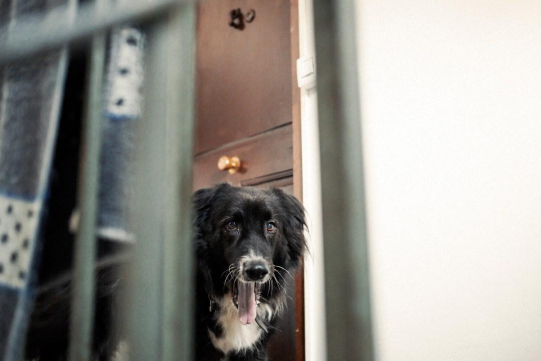 003_fotografia-mascotas_els-magnifics_vulcano-olot-trico