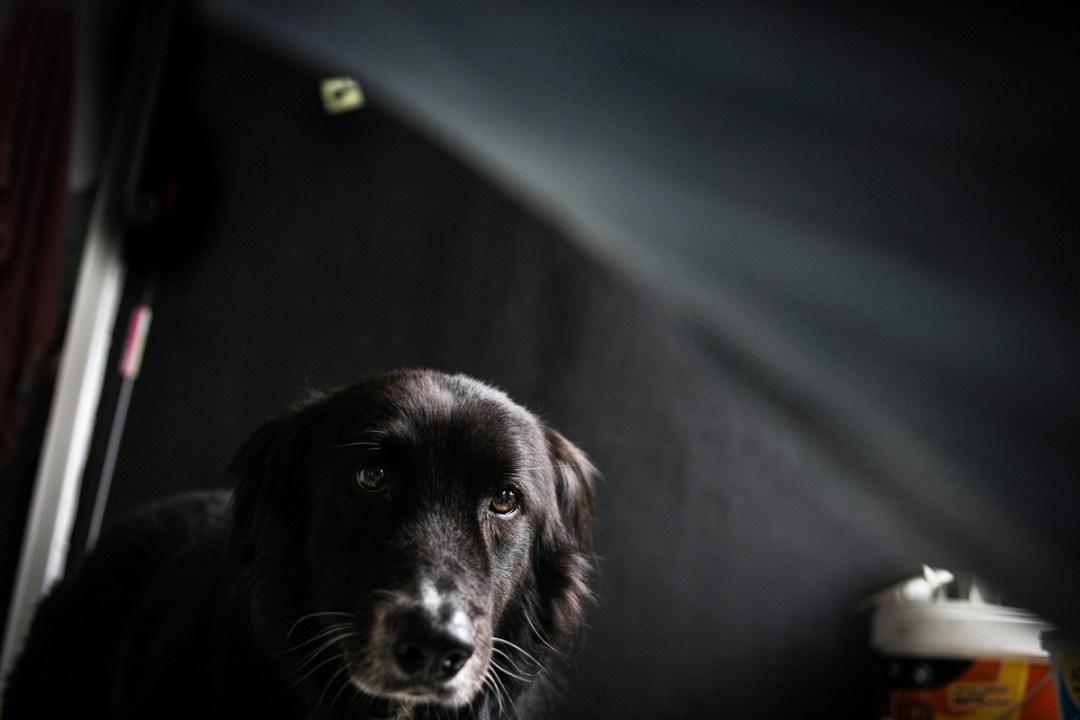 023_fotografia-mascotas_els-magnifics_vulcano-olot-trico