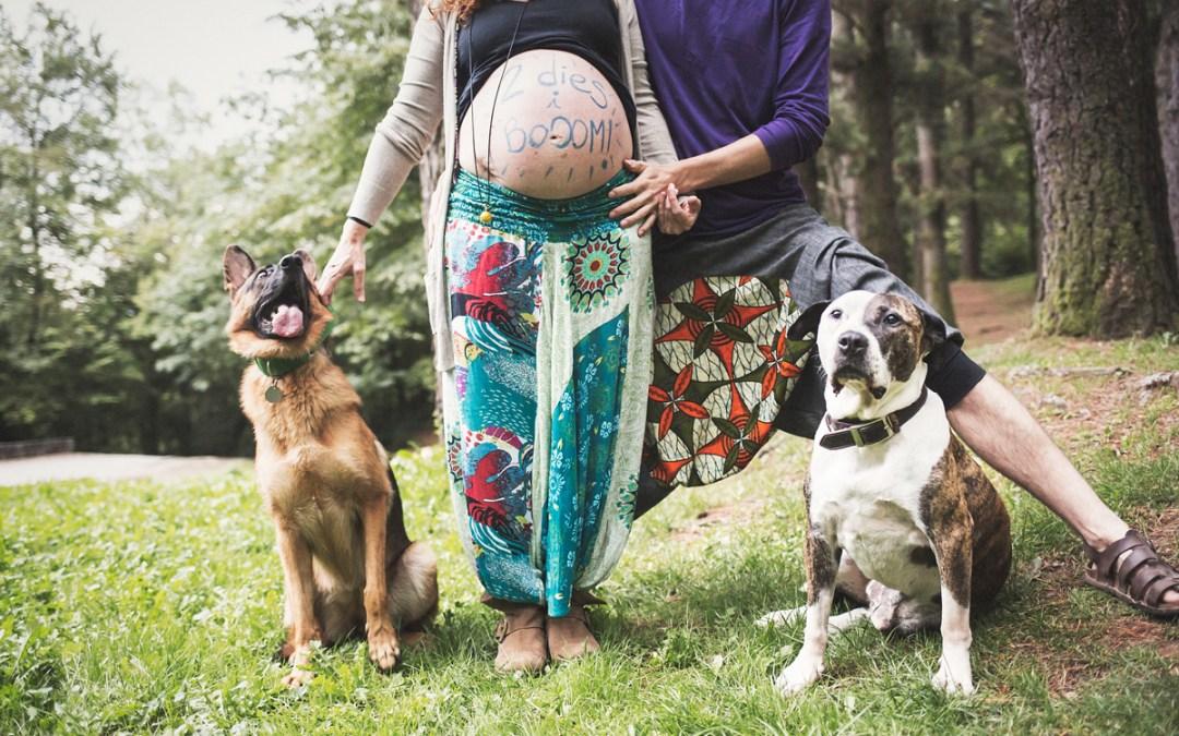 Fotógrafo de mascotas «pre-mamá en el bosque con Jamfri & Loba»