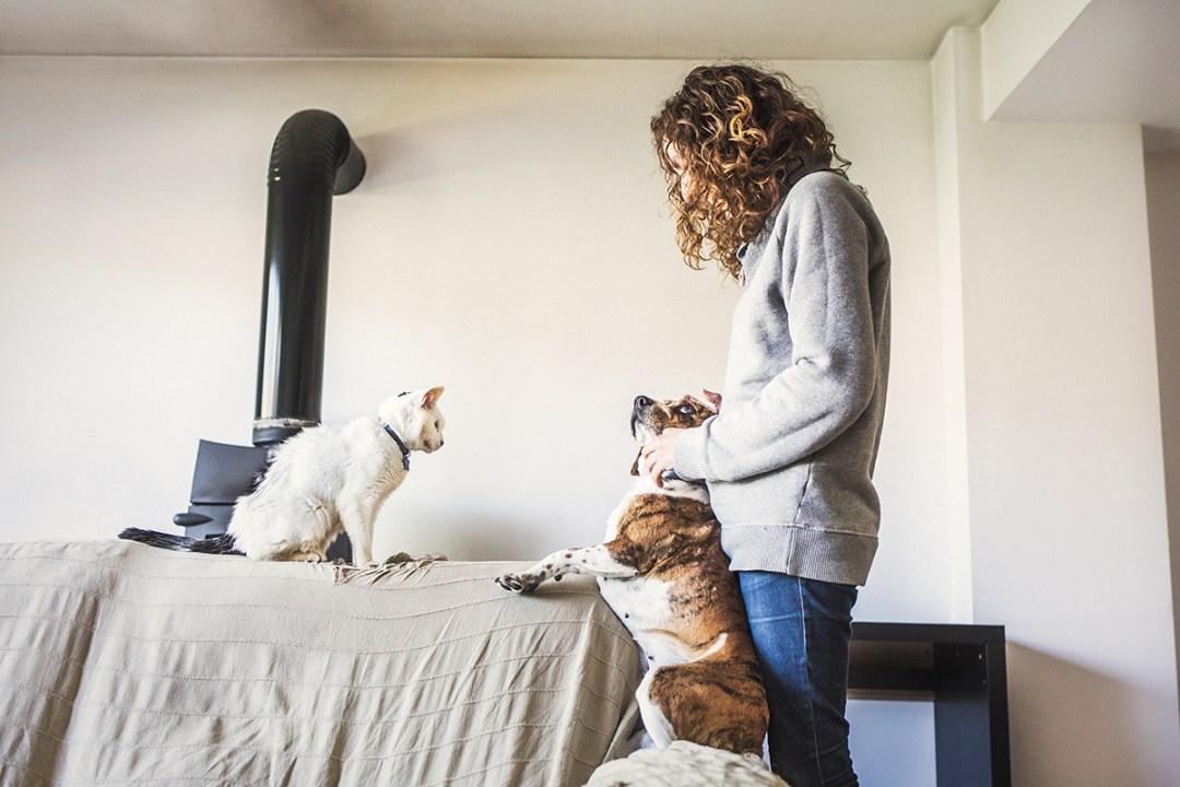 chica con su gato en el sofá el perro mira a la chica