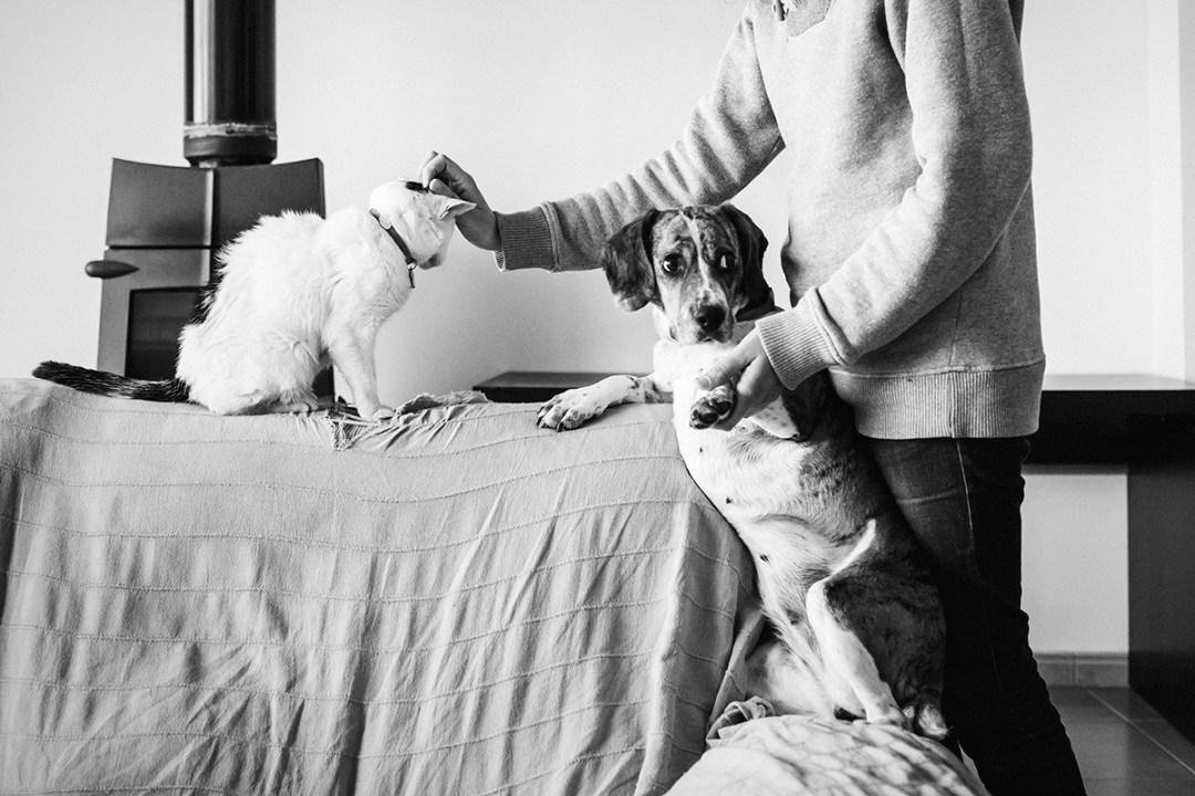 chica acaricia a su gato en el sofá, el perro mira