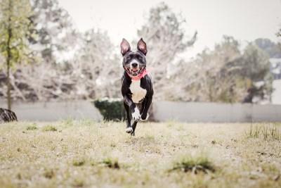 001_reportaje de mascotas_fotografo de mascotas_elsmagnifics
