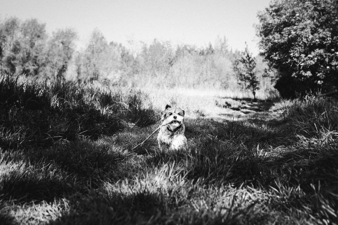 005_reportaje de mascotas_elsmagnifics_Estany Banyoles