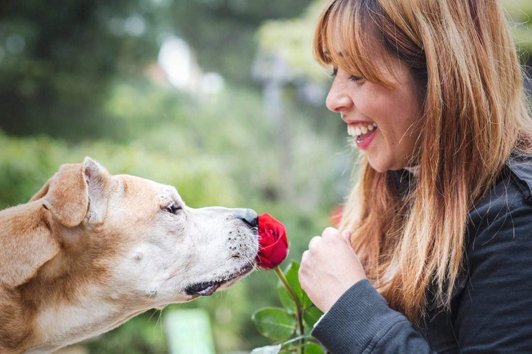 reportaje de perro PPP American Stanford oliendo una rosa