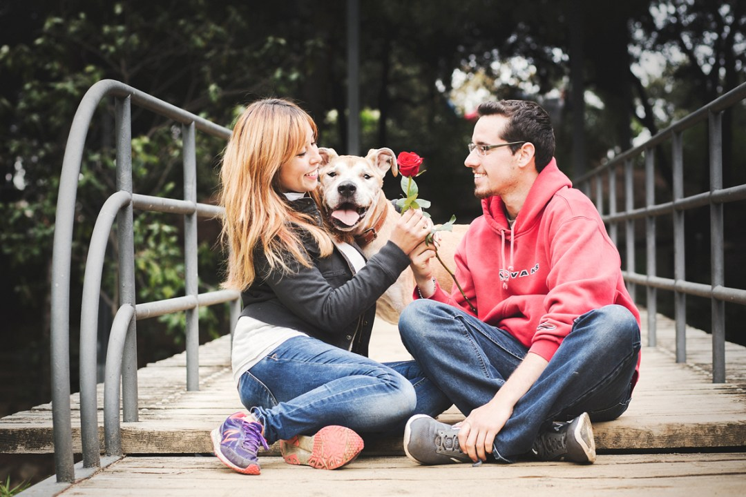 Fotógrafo de mascotas perro PPP American Stanford y su familia en el parque en Sant Jordi