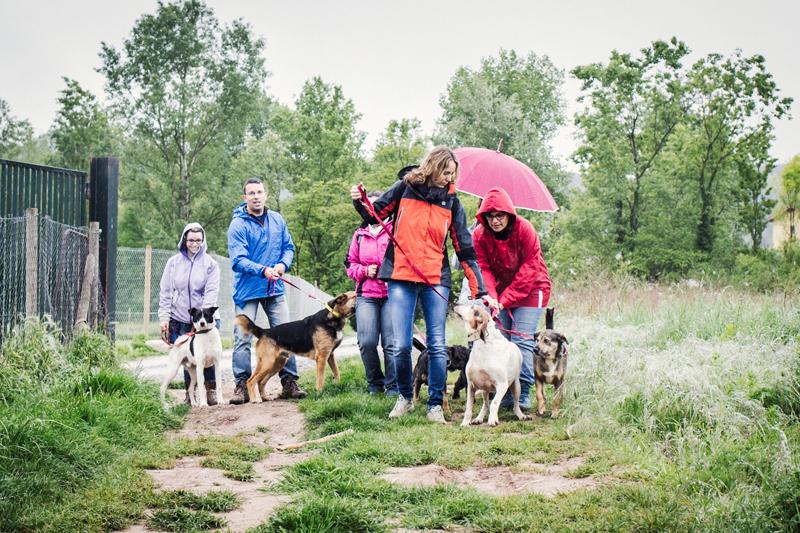 016_caminada popular solidaria _fotografo mascotas_adoptanocompres