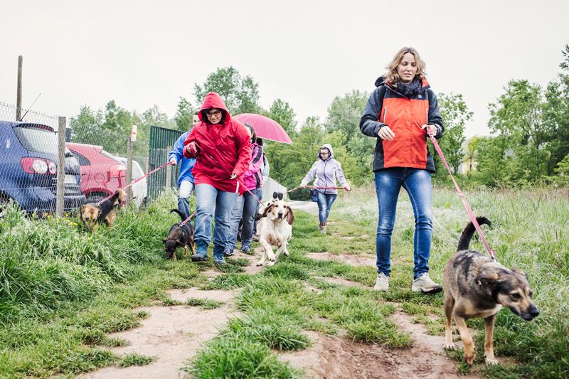 017_caminada popular solidaria _fotografo mascotas_adoptanocompres