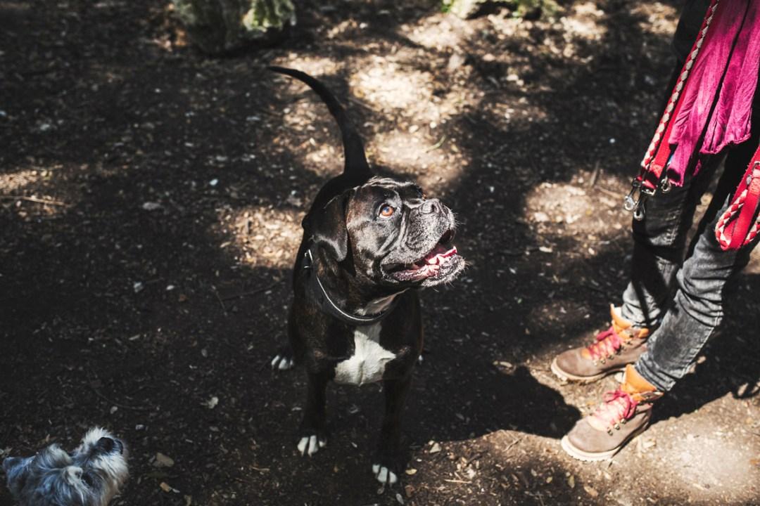 018_reportaje de mascotas_elsmagnifics_Estany Banyoles