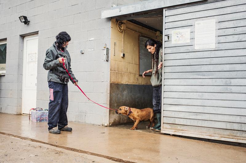 023_caminada popular solidaria _fotografo mascotas_adoptanocompres