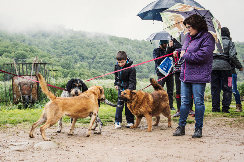 047_caminada popular solidaria _fotografo mascotas_adoptanocompres