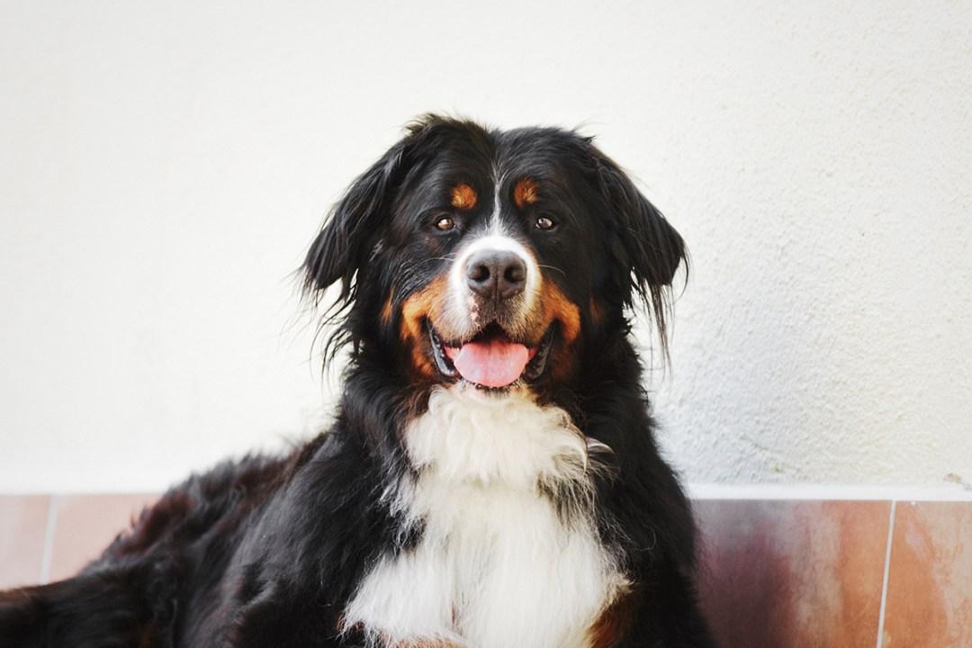fotografo de mascotas 003-elsmagnifics-MuffinIzoku