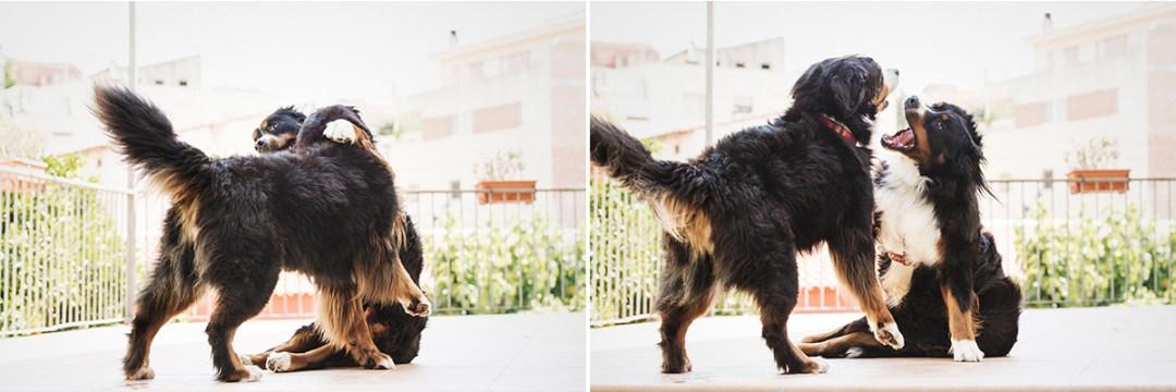 fotografo de mascotas 016a-elsmagnifics-MuffinIzoku
