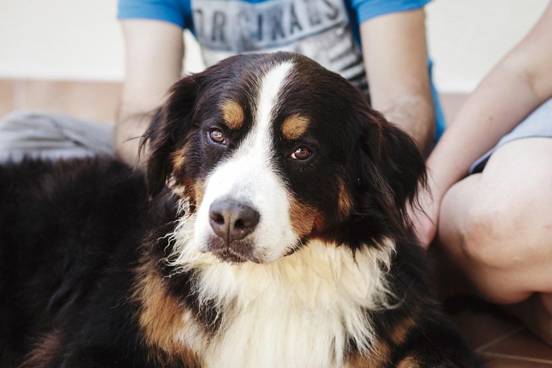 fotografo de mascotas 028-elsmagnifics-MuffinIzoku