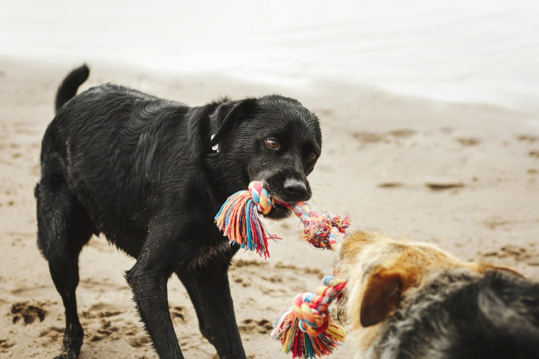 fotografo de mascotas 042_elsmagnifics-OdieDex