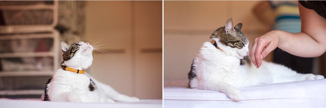 fotografo de mascotas 043a-elsmagnifics-MuffinIzoku
