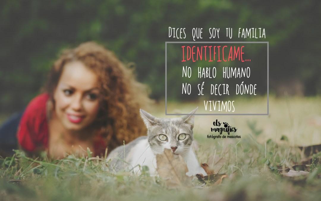 IDENTIFICA A TU GATO! ponle CHIP a tu familia!