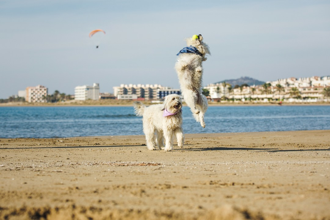 fotografo-de-mascotas-009-els-magnifics_perro-williemaggie