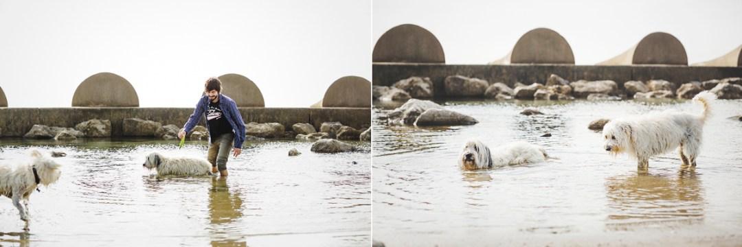 fotografo-de-mascotas-013-els-magnifics_perro-williemaggie