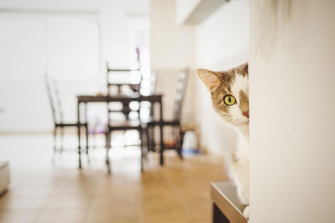 fotografo-de-mascotas-016-els-magnifics_gatos-lonabrugi