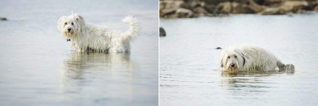 fotografo-de-mascotas-016-els-magnifics_perro-williemaggie