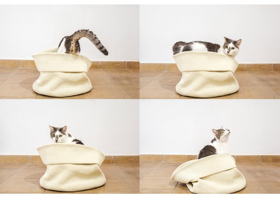 fotografo-de-mascotas-017-els-magnifics_gatos-lonabrugi