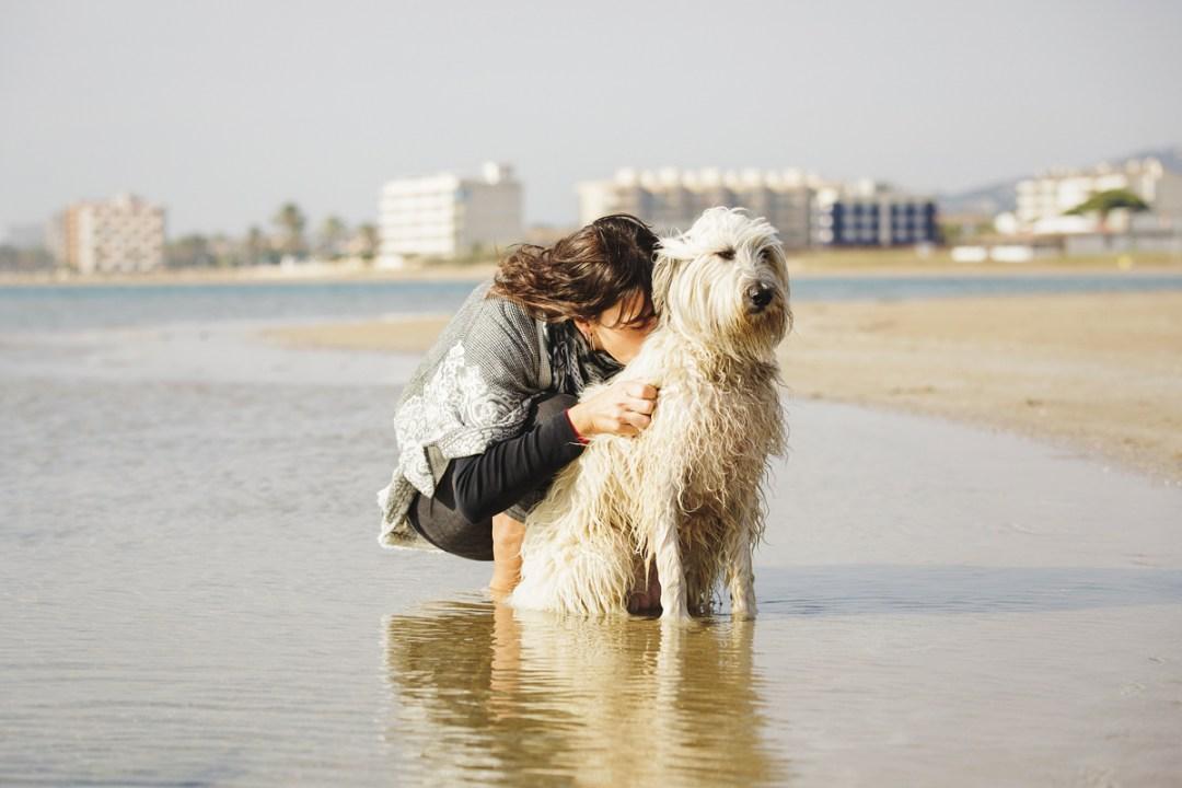 fotografo-de-mascotas-019-els-magnifics_perro-williemaggie