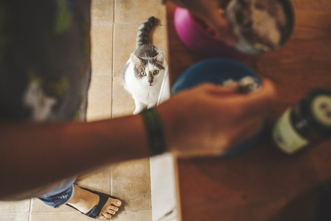 fotografo-de-mascotas-020-els-magnifics_gatos-lonabrugi