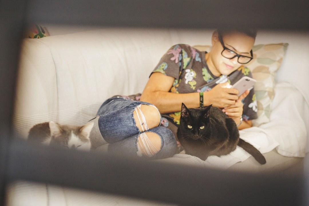 fotografo-de-mascotas-026-els-magnifics_gatos-lonabrugi