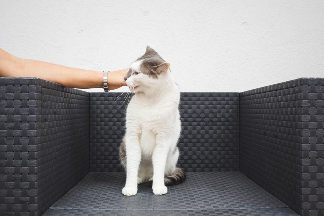 fotografo-de-mascotas-032-els-magnifics_gatos-lonabrugi