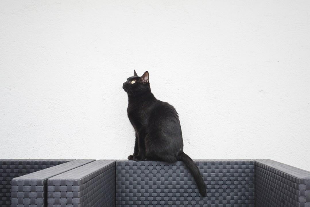 fotografo-de-mascotas-039-els-magnifics_gatos-lonabrugi