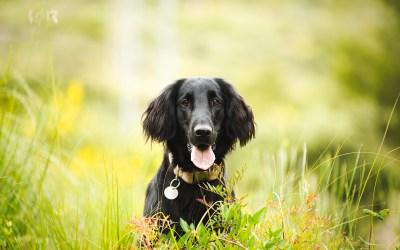 Fotógrafo de mascotas: Una sirenita llamada Fosca