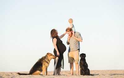 Fotógrafo de mascotas: Atardecer en la playa II