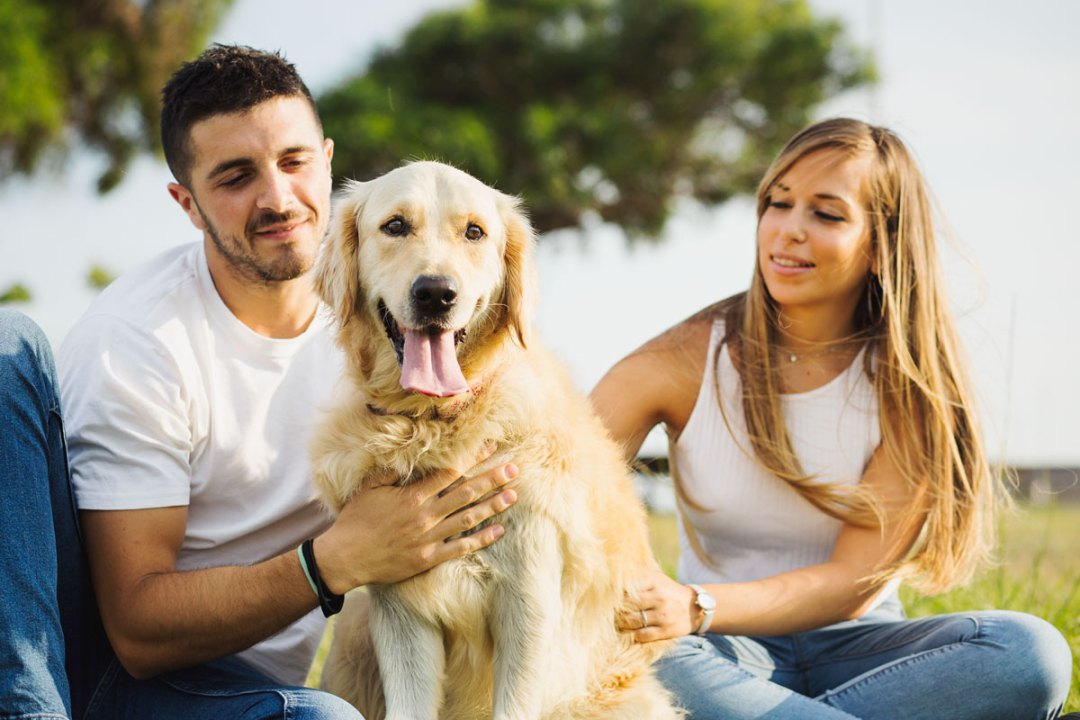 golden retriever retrato en familia