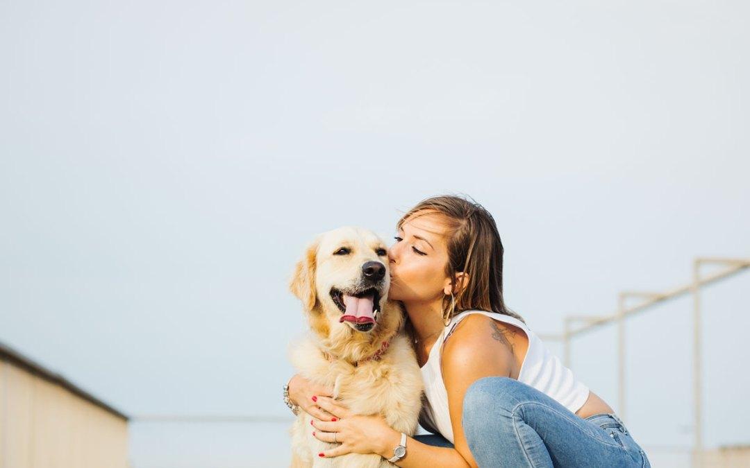 Fotógrafo de Mascotas: Mia, una Golden Retriever muy suertuda