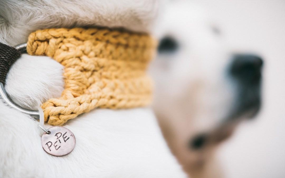 """Fotógrafo de Mascotas: New Look de marca """"El Collaret del Pep"""" I"""