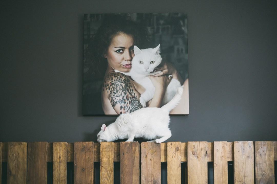 cuadro gato blanco decoración