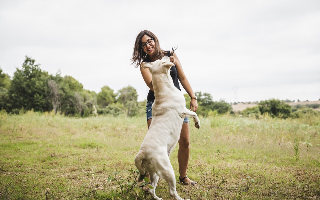 Protegido: Fotógrafo de mascotas: Lisa, una labrador saltimbanqui