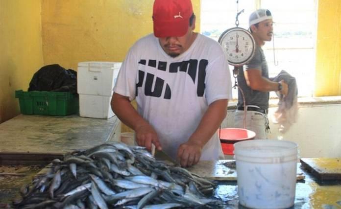 Resultado de imagen de pez pajarito isla de la piedra